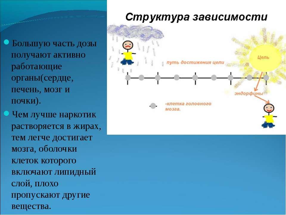 Большую часть дозы получают активно работающие органы(сердце, печень, мозг и ...