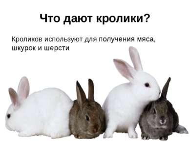 Что дают кролики? Кроликов используют для получения мяса, шкурок и шерсти