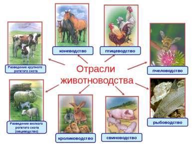 Отрасли животноводства Разведение крупного рогатого скота Разведение мелкого ...