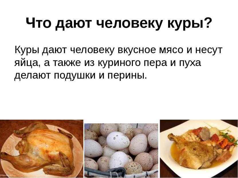 Что дают человеку куры? Куры дают человеку вкусное мясо и несут яйца, а также...