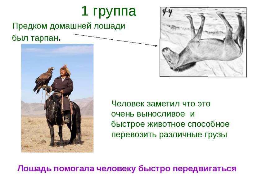Предком домашней лошади был тарпан. Человек заметил что это очень выносливое ...