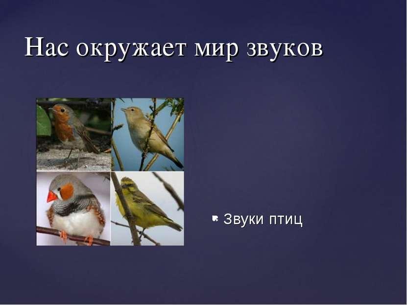 Нас окружает мир звуков Звуки птиц звуковые волны