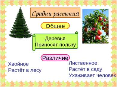 Сравни растения Общее Различие Деревья Приносят пользу Хвойное Растёт в лесу ...