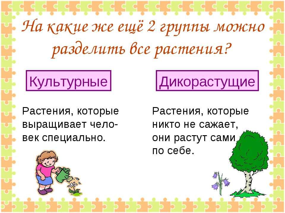 На какие же ещё 2 группы можно разделить все растения? Растения, которые выра...