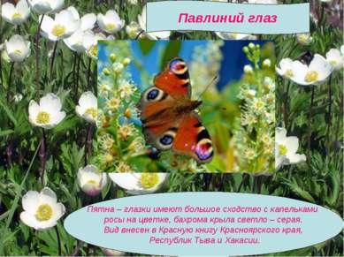 Пятна – глазки имеют большое сходство с капельками росы на цветке, бахрома кр...