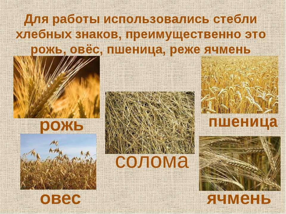 Для работы использовались стебли хлебных знаков, преимущественно это рожь, ов...