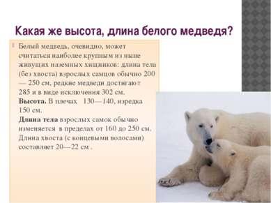 Какая же высота, длина белого медведя? Белый медведь, очевидно, может считать...