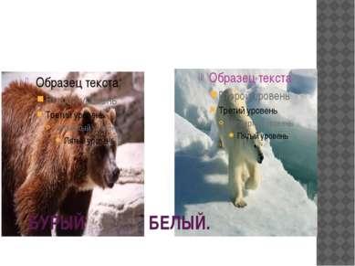БУРЫЙ БЕЛЫЙ.