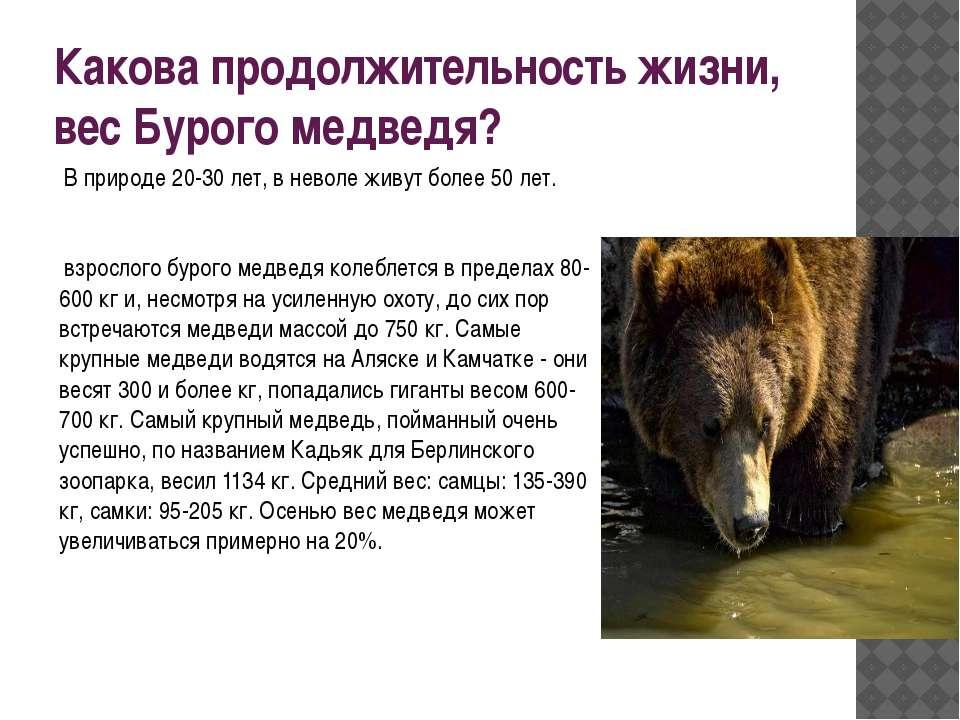 Какова продолжительность жизни, вес Бурого медведя? В природе 20-30 лет, в н...