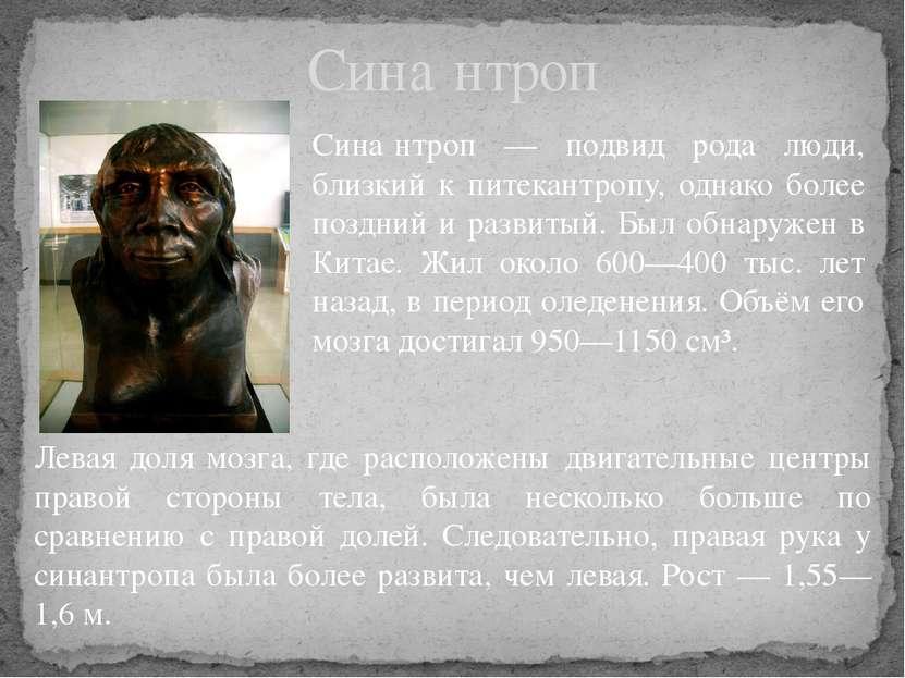 Сина нтроп — подвид рода люди, близкий к питекантропу, однако более поздний и...