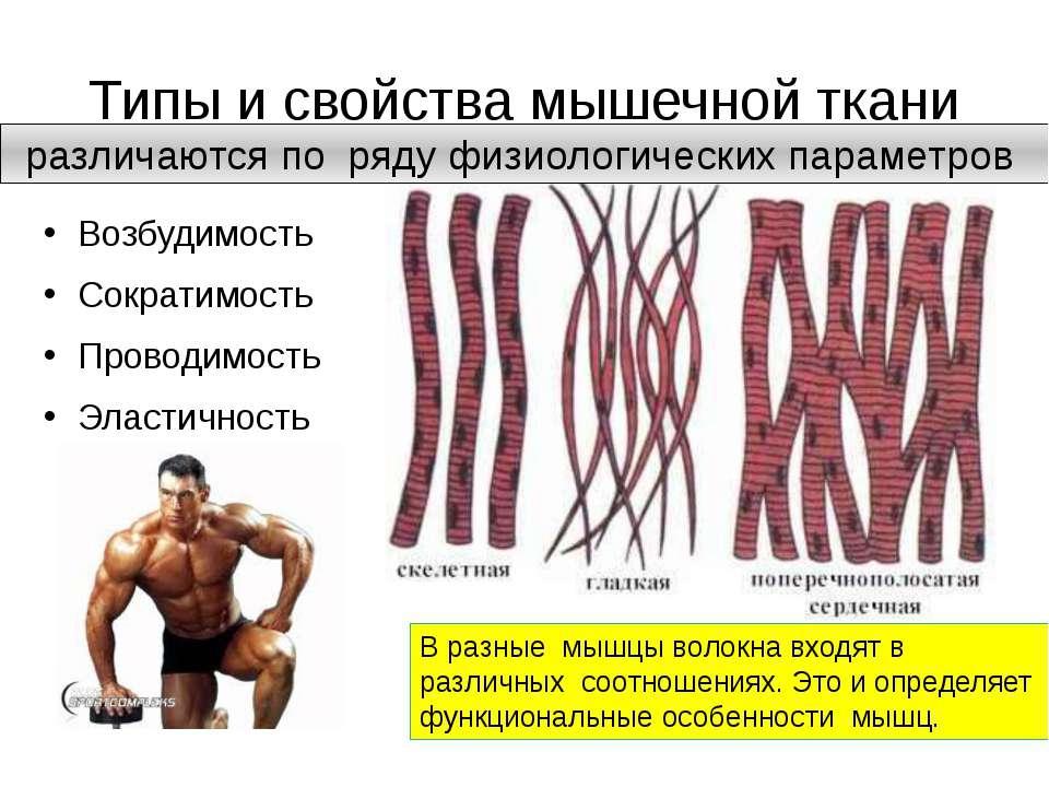 Как сделать окислительные мышечные волокна