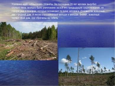 Усиленно идёт «облысение» планеты. За последние 20 лет человек вырубил стольк...