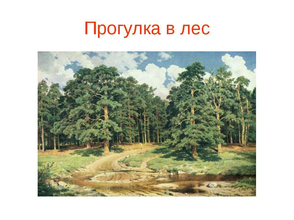 Прогулка в лес