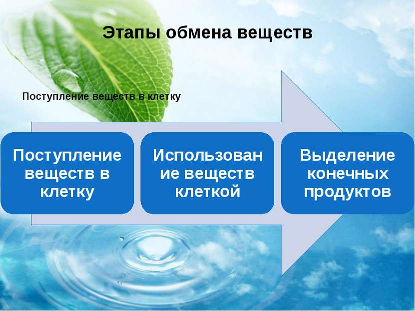 Этапы обмена веществ