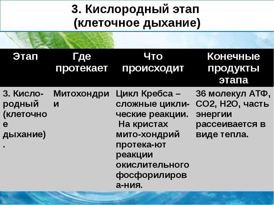 3. Кислородный этап (клеточное дыхание) Этап Где протекает Чтопроисходит Коне...