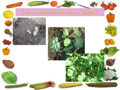 Из семени-в растение