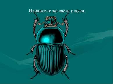 Найдите те же части у жука