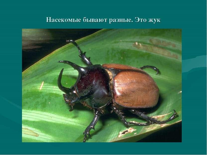 Насекомые бывают разные. Это жук