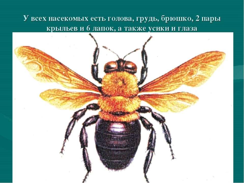 У всех насекомых есть голова, грудь, брюшко, 2 пары крыльев и 6 лапок, а такж...