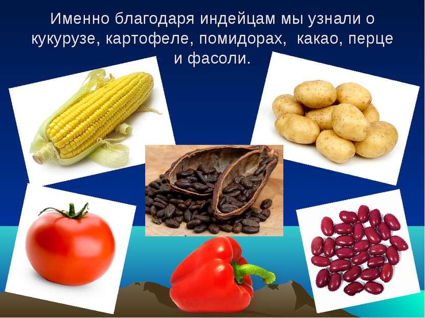 Именно благодаря индейцам мы узнали о кукурузе, картофеле, помидорах, какао, ...