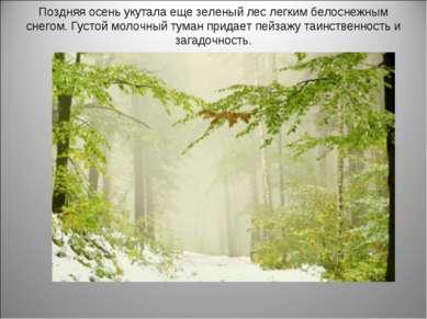 Поздняя осень укутала еще зеленый лес легким белоснежным снегом. Густой молоч...