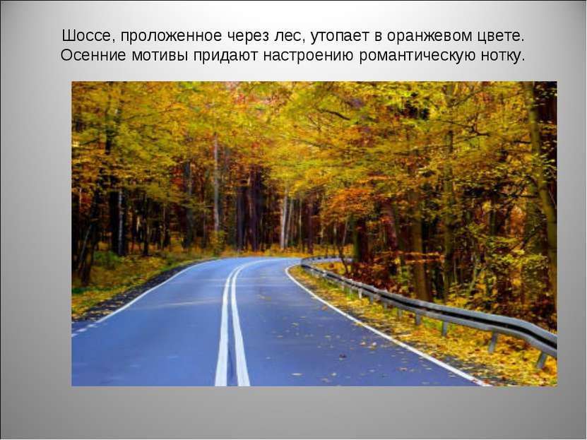 Шоссе, проложенное через лес, утопает в оранжевом цвете. Осенние мотивы прида...