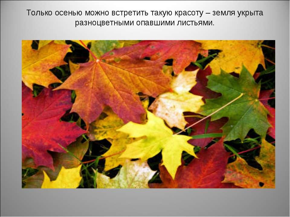 Только осенью можно встретить такую красоту – земля укрыта разноцветными опав...