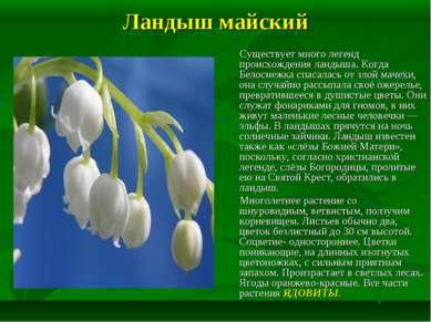 Ландыш майский Существует много легенд происхождения ландыша. Когда Белоснежк...