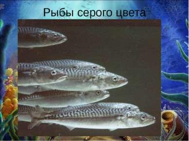 Рыбы серого цвета