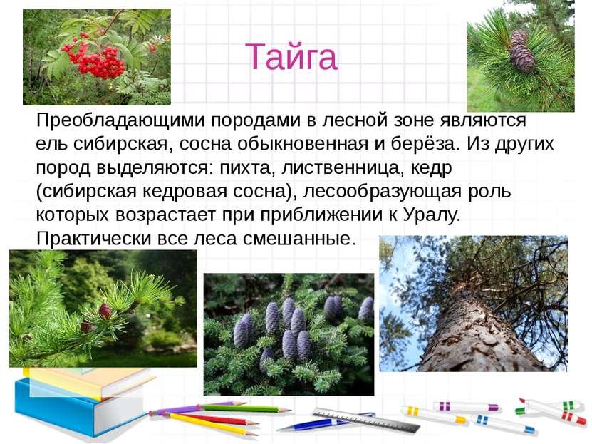 Тайга Преобладающими породами в лесной зоне являются ель сибирская, сосна обы...