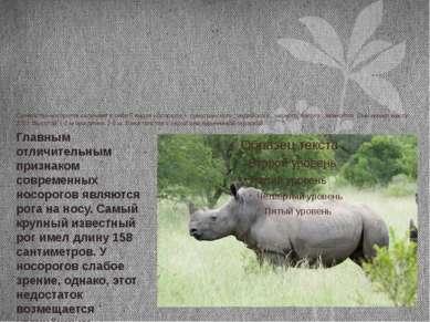 Семейство носорогов включает в себя 5 видов носорогов – суматранского , индий...