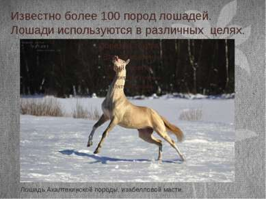 Известно более 100 пород лошадей. Лошади используются в различных целях. Лоша...