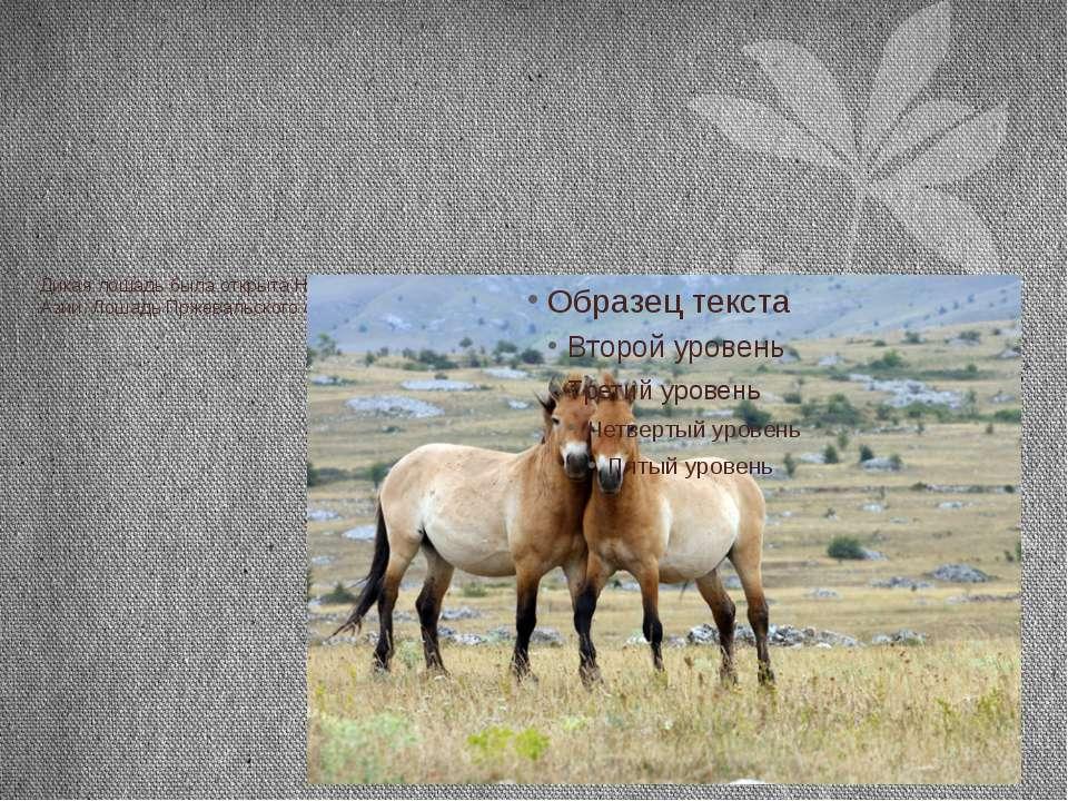 Дикая лошадь была открыта Н. М. Пржевальским в 1879 г. В горных пустынях запа...