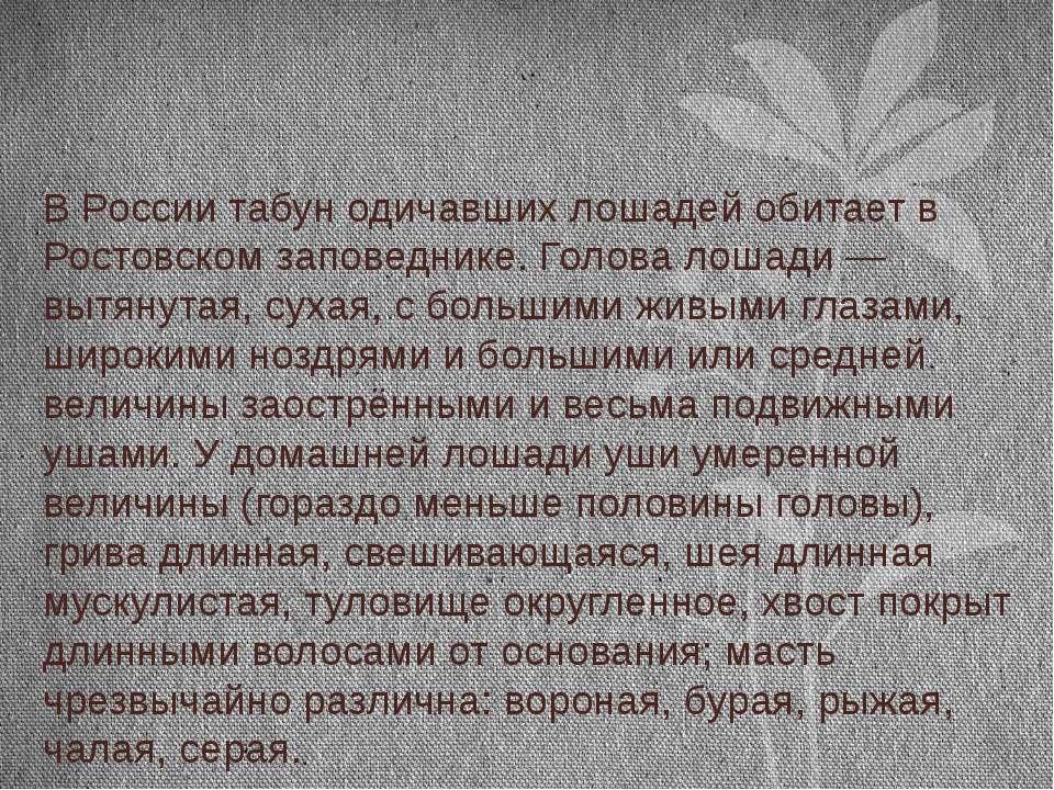 В России табун одичавших лошадей обитает в Ростовском заповеднике. Голова лош...
