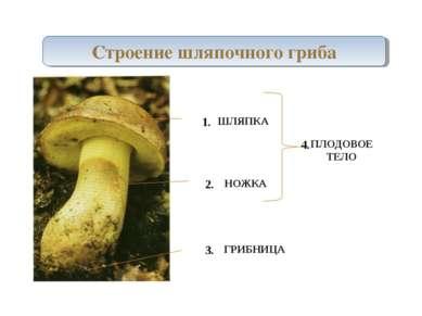 Строение шляпочного гриба ШЛЯПКА НОЖКА ГРИБНИЦА ПЛОДОВОЕ ТЕЛО 1. 2. 3. 4.