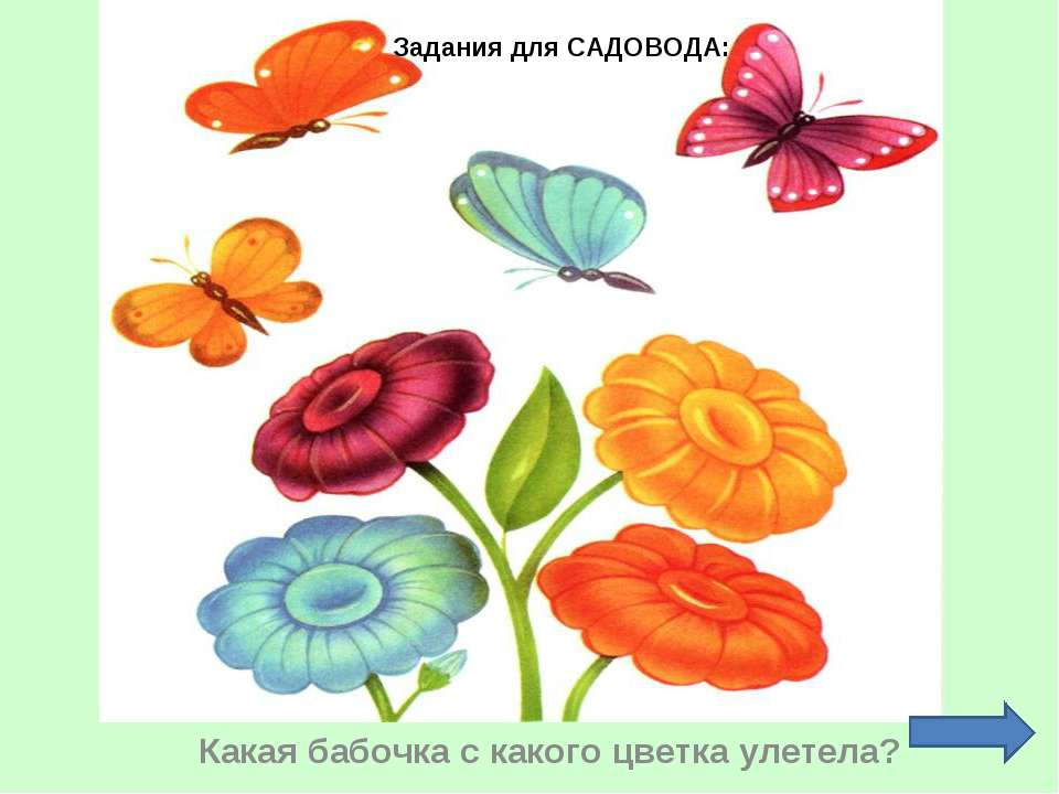 Какая бабочка с какого цветка улетела? Задания для САДОВОДА: