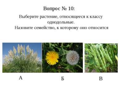 А Б В Вопрос № 10: Выберите растение, относящееся к классу однодольные. Назов...