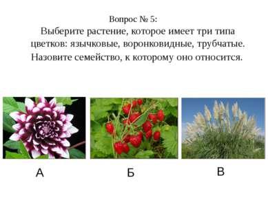Вопрос № 5: Выберите растение, которое имеет три типа цветков: язычковые, вор...