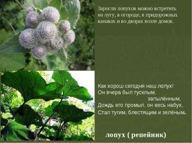 лопух ( репейник) Заросли лопухов можно встретить на лугу, в огороде, в придо...