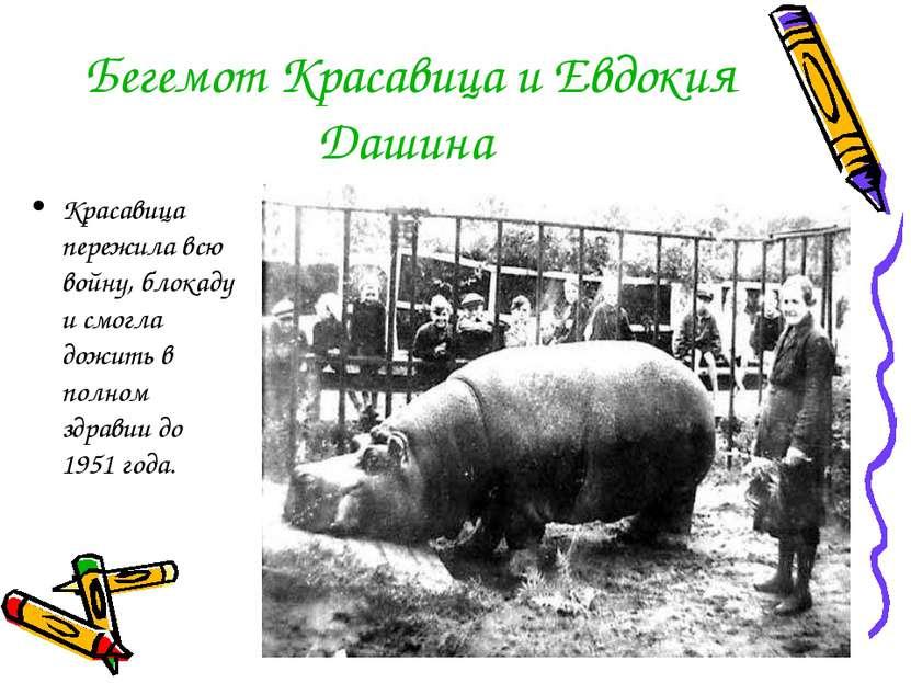 Бегемот Красавица и Евдокия Дашина Красавица пережила всю войну, блокаду и см...
