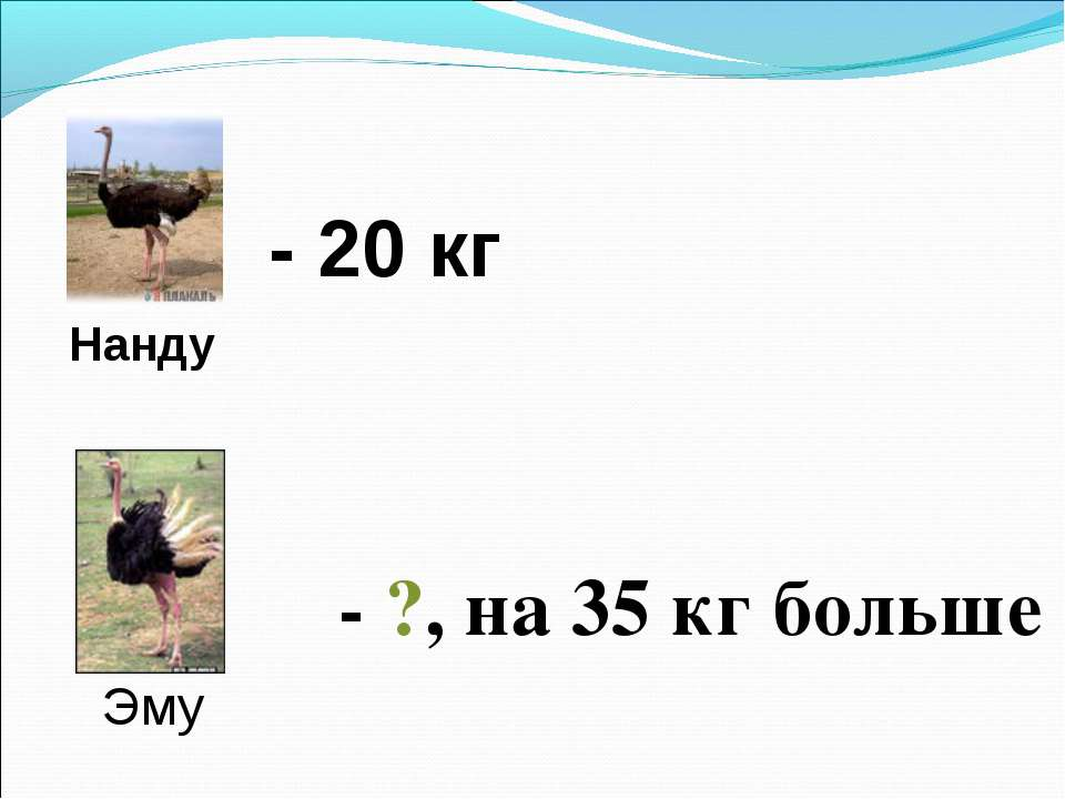 Нанду Эму - 20 кг - ?, на 35 кг больше
