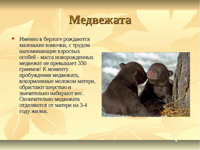 Медвежата Именно в берлоге рождаются маленькие комочки, с трудом напоминающие...
