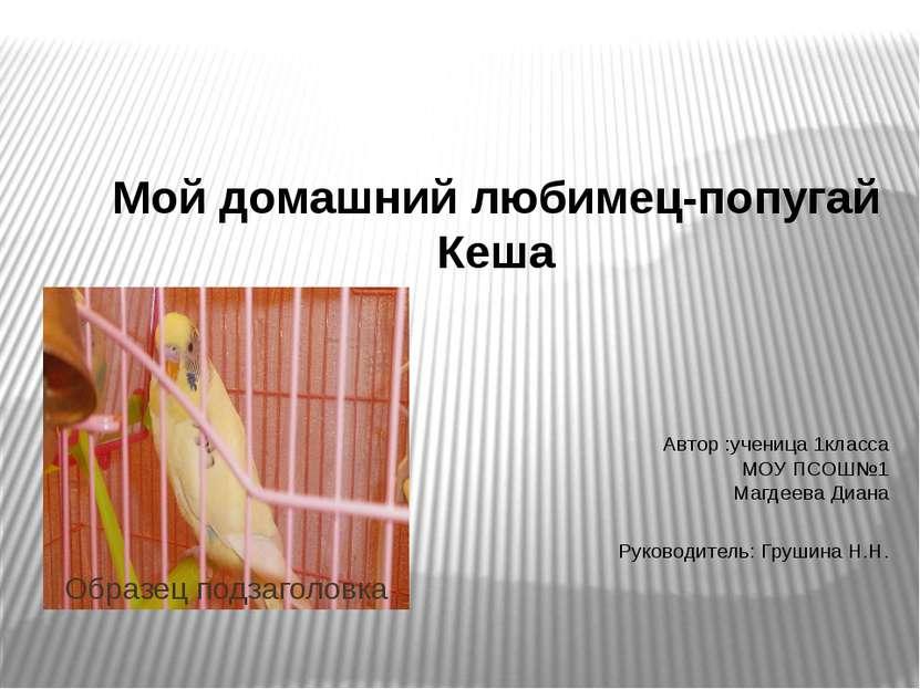 Мой домашний любимец-попугай Кеша Автор :ученица 1класса МОУ ПСОШ№1 Магдеева ...
