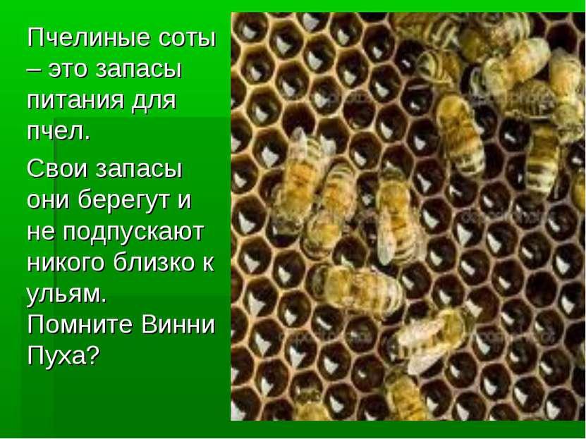 Пчелиные соты – это запасы питания для пчел. Свои запасы они берегут и не под...
