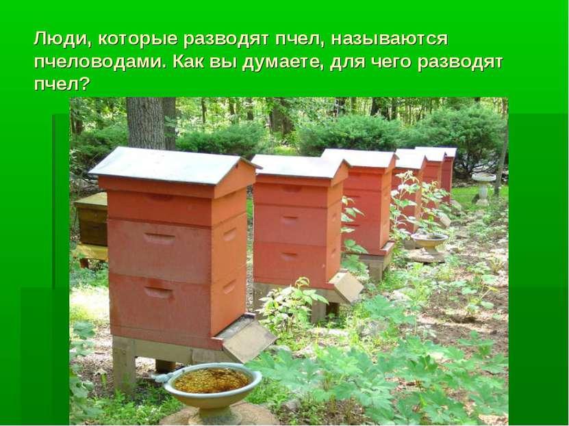 Люди, которые разводят пчел, называются пчеловодами. Как вы думаете, для чего...