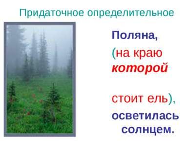 Придаточное определительное Поляна, (на краю которой стоит ель), осветилась с...