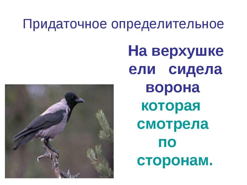 Придаточное определительное На верхушке ели сидела ворона которая смотрела по...
