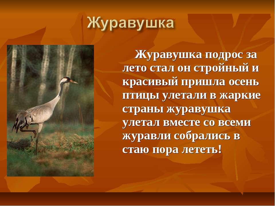 Журавушка подрос за лето стал он стройный и красивый пришла осень птицы улета...