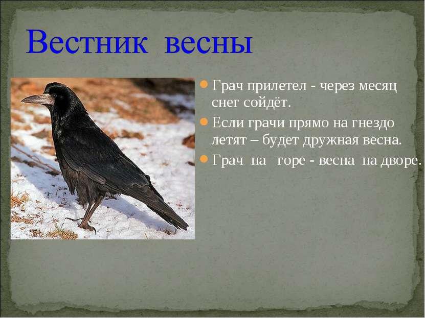Грач прилетел - через месяц снег сойдёт. Если грачи прямо на гнездо летят – б...