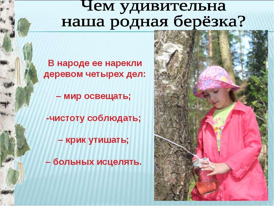 В народе ее нарекли деревом четырех дел: – мир освещать; -чистоту соблюдать; ...